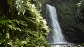 frondoso : White waterfall falling along bedrock in back of green ferns Vídeos
