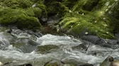 Thin narrow brook flowing beside mossy rock in Kagoshima Стоковые видеозаписи