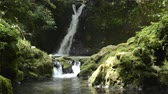 Waterfall falling in back of mossy rock in Kagoshima