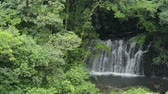 Япония : Waterfall surrounded by bright green forest in summer Стоковые видеозаписи