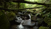 Small brook flowing among stacked stones under fallen tree in green forest Vídeos