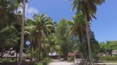 Walking Through Palm Trees On Exotic Island, La Digue, Seychelles 1