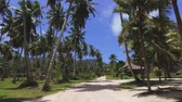 Walking Through Palm Trees On Exotic Island, La Digue, Seychelles 3