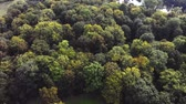 bosques : Aerial drone footage, the green forest Stock Footage