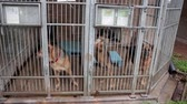 abrigo : Dogs in the animal shelter, dogs in the enclosure for dogs