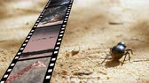 affectionate : Digital composite of a bug walking on sand while a film strip shows different videos and pictures on nature and animals Stock Footage