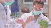 estatística : Close up of Caucasian male and female scientists studying a broccoli while wearing face masks. Equations are running in the foreground. Other scientists are also working in the background