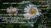 world wide : Digital animation of chick weed flowers under the rain with a rotating globe on the background. Digital animation of computer codes and interface are running in the foreground Stock Footage