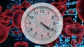 bodily : Digitally generated animation of white clock with red blood cells and program codes moving in the background