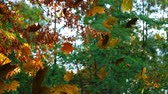 zeichentrick : Animation of colourful leaves falling in autumn in a forest