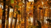 9월 : Animation of colourful leaves falling in autumn in a forest