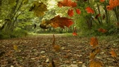 kasım : Animation of colourful leaves falling in autumn in a forest