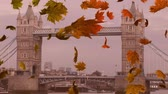 kasım : Animation of colourful leaves falling in autumn in London Stok Video
