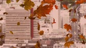 dry season : Animation of colourful leaves falling in autumn in a city