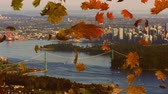 kasım : Animation of colourful leaves falling in autumn with cityscape in the background