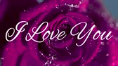 seni seviyorum : Animation of the words I Love You written in white on pink rose in the background Stok Video