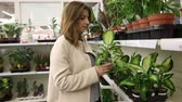 go cart : Young woman in supermarket. Woman chooses houseplants in the store Stock Footage