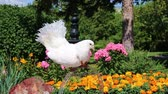 pomba : Cool white dove with beads
