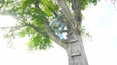 alpinista : Man climb up on tree