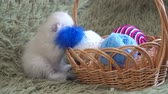 yünlü : White cute kitten sitting near basket with balls of wool