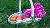 vime : Organic apples in basket in summer grass. Fresh flowers in nature