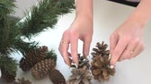 szyszka : Christmas background with hands holding fir cone