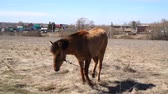 cabeza de caballo : Horse in the field of scenic nature landscape Archivo de Video