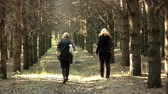 subtropics : women walk along a forest trail