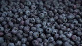 bakkaliye : close up shot of fresh blueberries, an excellent fruit to make juice, jam, cakes, pastries. the concept of nature, fresh fruit and blueberries Stok Video