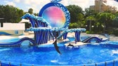 обученный : Orlando, Florida. April 20, 2019. Dolphins jumping at show in Seaworld Theme Park-