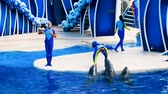 обученный : Orlando, Florida. February 25, 2019. Dolphins in colorful Dolphin Day show; It is a festive celebration of our natural world at Seaworld in International Drive area. Стоковые видеозаписи