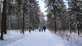 male animal : People walk in the winter woods