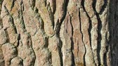 wood : Bark of a tree macro. Background Stock Footage