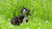 cat strofe : Black cat in the grass Stock Footage