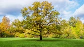 yellow : Oak tree on a Sunny autumn day. timelapse Stock Footage
