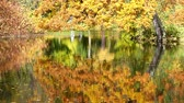 csupasz : Autumn trees reflected in the lake Stock mozgókép