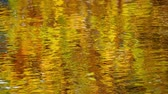 bare forest : Autumn trees reflected in the lake Stock Footage