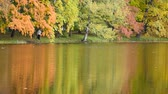yansıma : Autumn trees reflected in the lake Stok Video