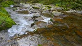 flowing water : Mountain river in summer Sunny day Stock Footage