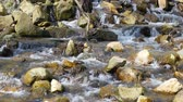 river rapids : Mountain river in summer Sunny day Stock Footage