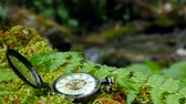 old time : Pocket watch on fern leaves