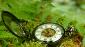 cep : Pocket watch on fern leaves
