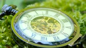černobílý : Pocket watch on green moss