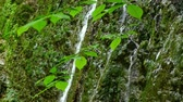 scenérie : Beautiful waterfall in Caucasus mountains Dostupné videozáznamy