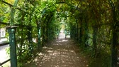 petersburg : Walk through the green tunnel. Peterhof. Russia
