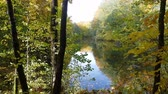 cais : Lake in autumn forest Stock Footage
