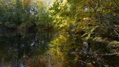 Lake in autumn forest Filmati Stock
