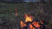 камин : Bonfire in the forest in windy weather Стоковые видеозаписи
