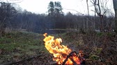 Bonfire in the forest in windy weather Stockvideo