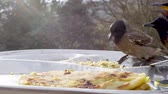 вилка : Birds peck food